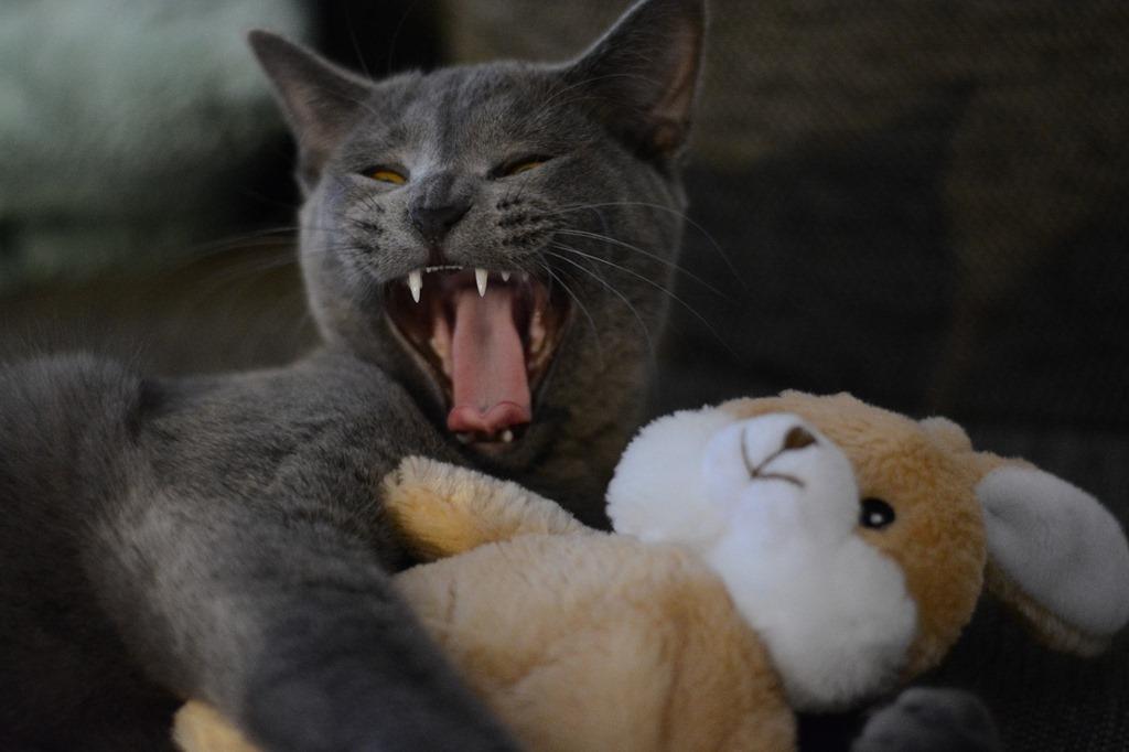 cat-2528930_1280