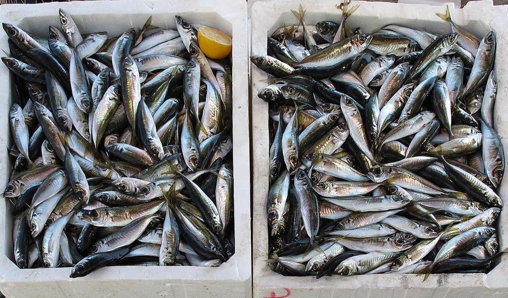 fish-2536121_1280