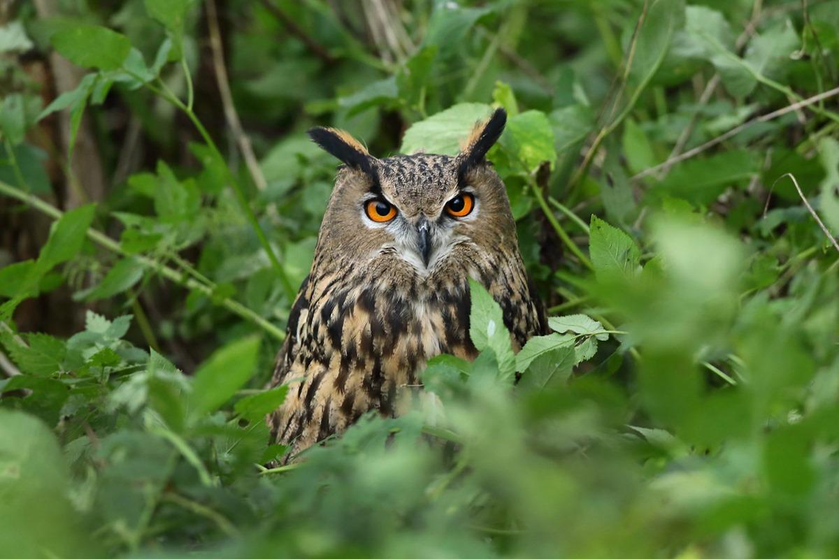 В Калининграде реализуется проект по сохранению редких исчезающих птиц
