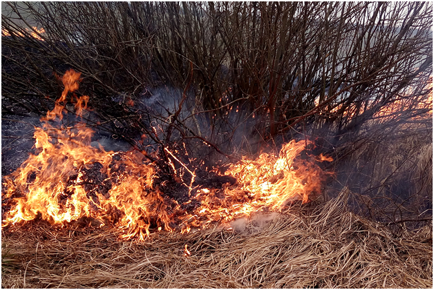 ВКалининградской области сначала пожароопасного сезона зафиксированы ландшафтные пожары на139 гектаров